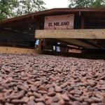 Capriles puso en funcionamiento Centro de Beneficio del Caca...